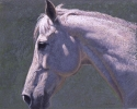Profile in White • SOLD