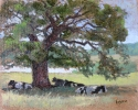 Cows at Belle Isle • SOLD